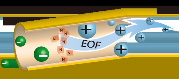 Электрофорез с карипазимом - классика физиопроцедур